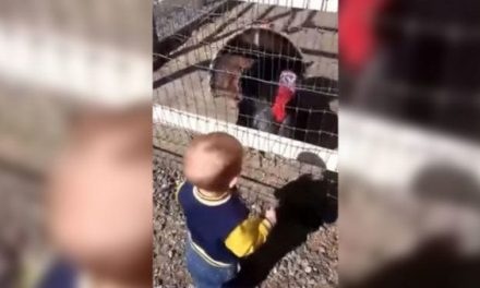 Can This Toddler Call Turkeys Better Than You?