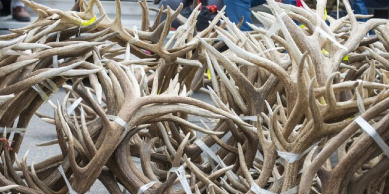 Do You Need Better Tips for Finding Sheds? Follow This Advice
