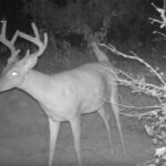 If a Deer Farts in the Woods and No One's There to Hear It, Will a Trail Cam Still Pick It Up?