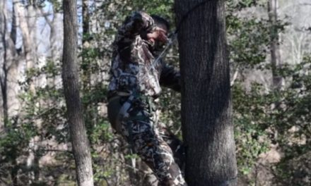 Saddle vs. Treestand: Which Method is Best?
