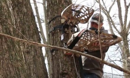 Shed Hunting: Is Now the Best Time to Hang Your Treestands?
