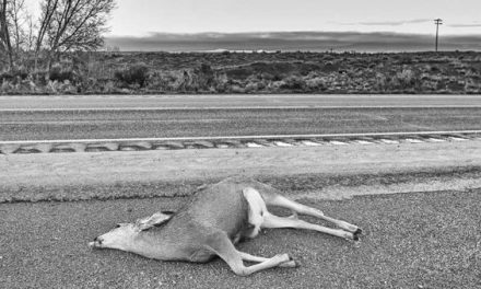 These Are the States That Let You Salvage and Eat Roadkill