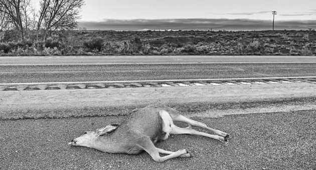 Eat Roadkill