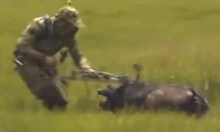 Video: In Case You Needed Proof Wild Hogs are Dangerous
