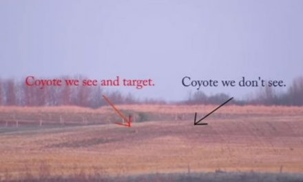 Video: This Might Be the Longest Coyote Kill Shot We've Seen