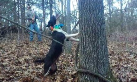 What Makes a Good Squirrel Hunting Dog?