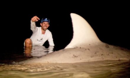 BlacktipH Lands Monster Bull Shark in River
