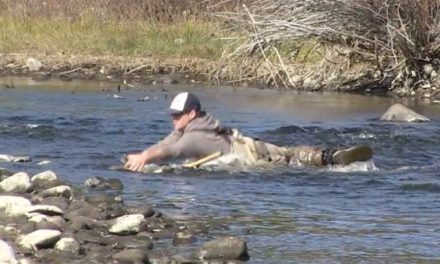 Fishing Guide Takes a Day Off, Ends Up Wrestling a Brown Trout