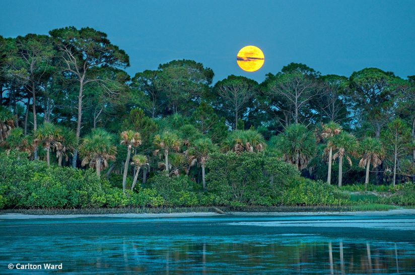 Image of Caladesi Island, a destination for nature photography in Florida