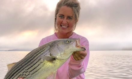 Kentucky Lake Cumberland Striped Bass Heating Up
