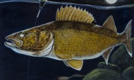 MINNESOTA – STAMP YOUR LICENSE FOR MORE WALLEYES