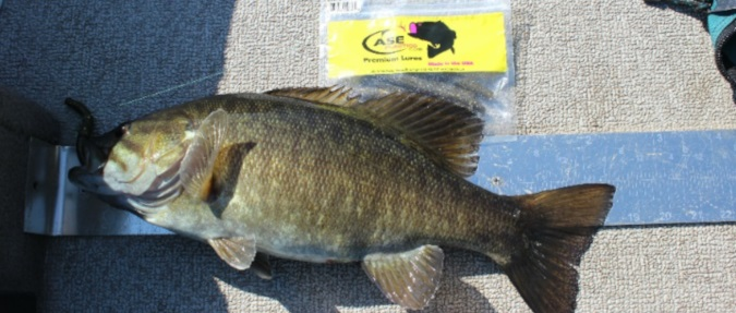 Pre-Spawn Smallmouth, By Mike Mladenik Guide Service