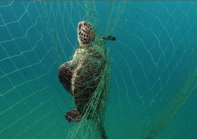 Sportfishing Industry Leader Testifies Before U.S. House of Representatives on Drift Gillnet Phaseout