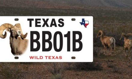 Texas Has a New Bighorn Sheep License Plate, Adding to the State's Conservation-Themed Designs