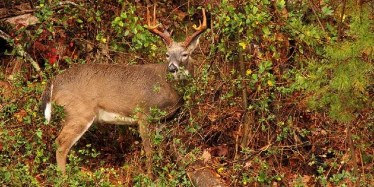 The 2018-19 North Carolina Deer Season Harvest Numbers Aren't Great, But They Aren't Horrible Either