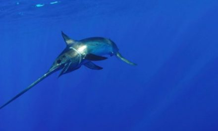 The Surprising Story of Swordfish You May Not Know