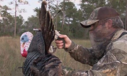 This is What it's Like to Decapitate a Gobbler with The Judge Revolver