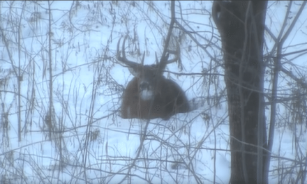 Video: Buck Instantly Drops Its Antlers When Arrow Connects