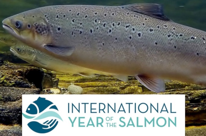 """Year of the Salmon"" - NOAA"