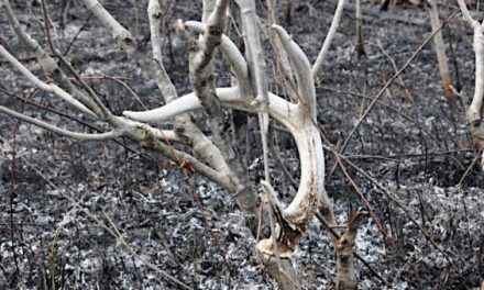 6 Shed Hunting YouTube Channels You Should Be Watching