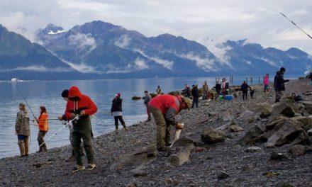 Alaska Sockeye Limit Raised in Resurrection Bay, So Now Would Be the Time to Go
