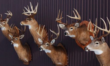 An Outsider's Look at Michigan Deer Hunting