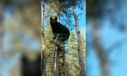 Hunter Hilariously Asks Bear to Get Out of His Treestand