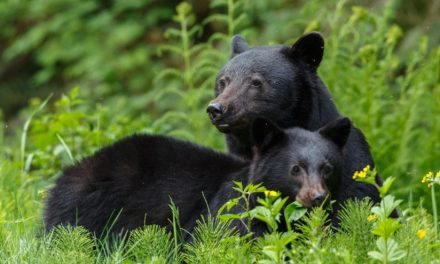 Please Don't Feed Bears—Or Other Wildlife