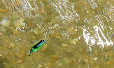 The Perfect Pairing- Creeks and Crickhoppers