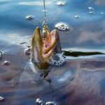 10 Trout Lures and Some Advice on How to Fish Them
