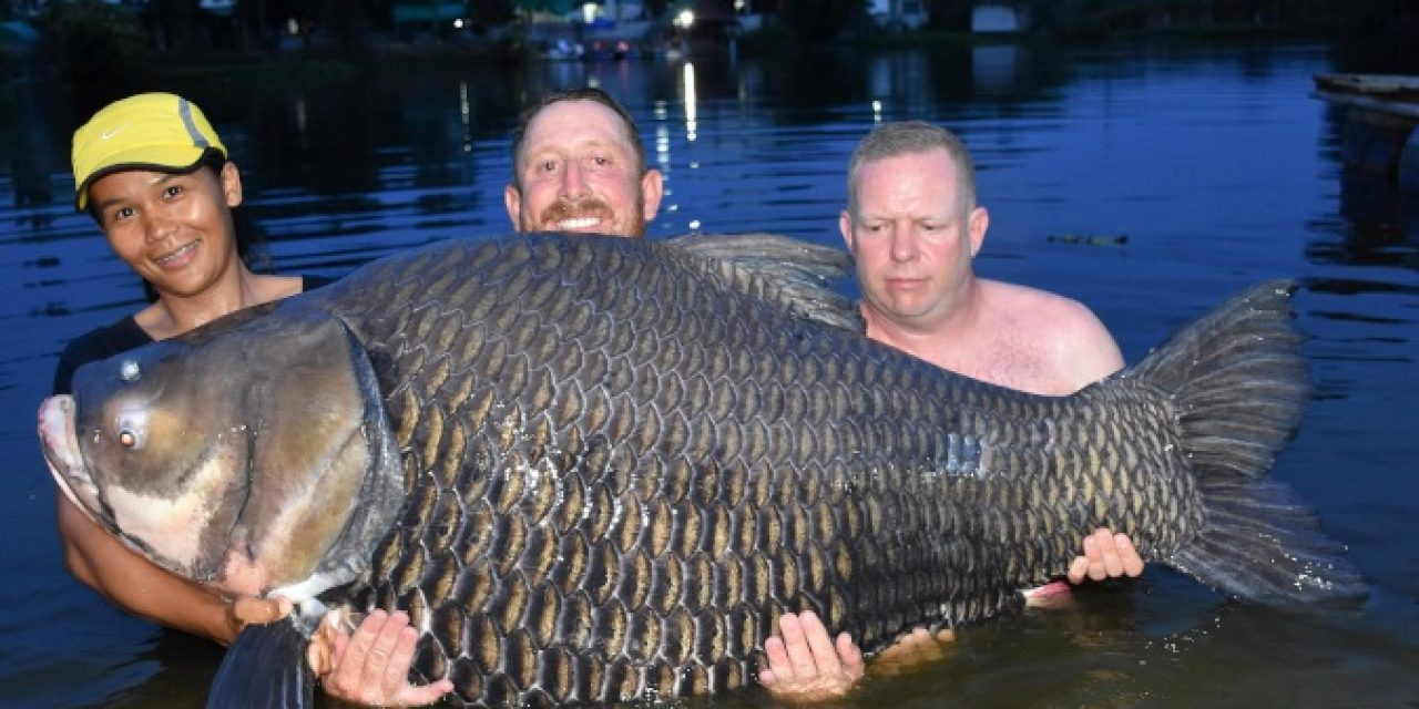 80 minute Fight Lands Brit World Record Siamese Carp
