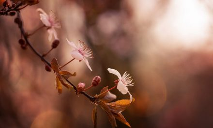 Beautiful Bokeh Assignment Winner Jessica Nelson