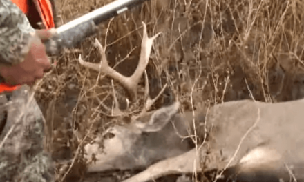 Have You Ever Seen a Deer Get Even With a Hunter?