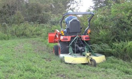 How to Create a Natural Food Plot