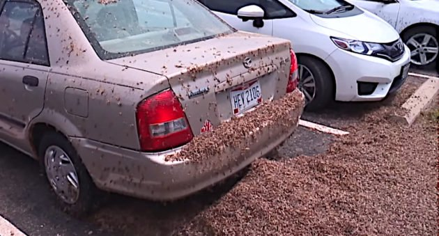Mayfly Hatch