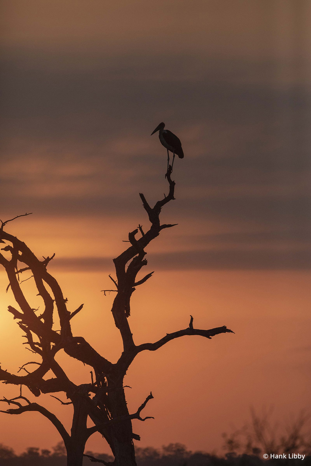 "Today's Photo Of The Day is ""Sunset Hunter"" by Hank Libby. Location: Kruger National Forest, Africa."