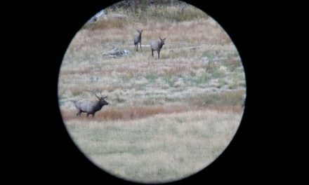 What Do You Think About Elk Hunting With the 280 AI?