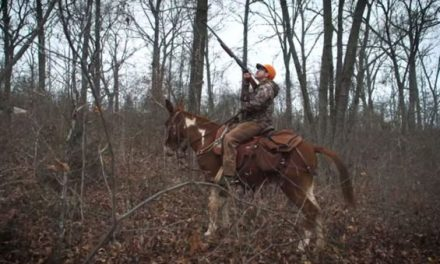 Clay Newcomb Takes Mules to Go Squirrel Hunting