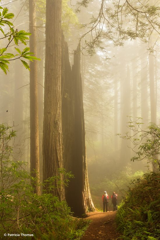 """Today's Photo Of The Day is """"Feeling Small"""" by Patricia Thomas. Location: California."""