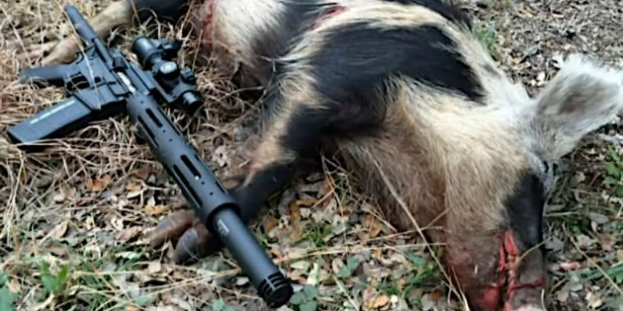 These Are Our 8 Choices for a Good Hog Hunting Gun