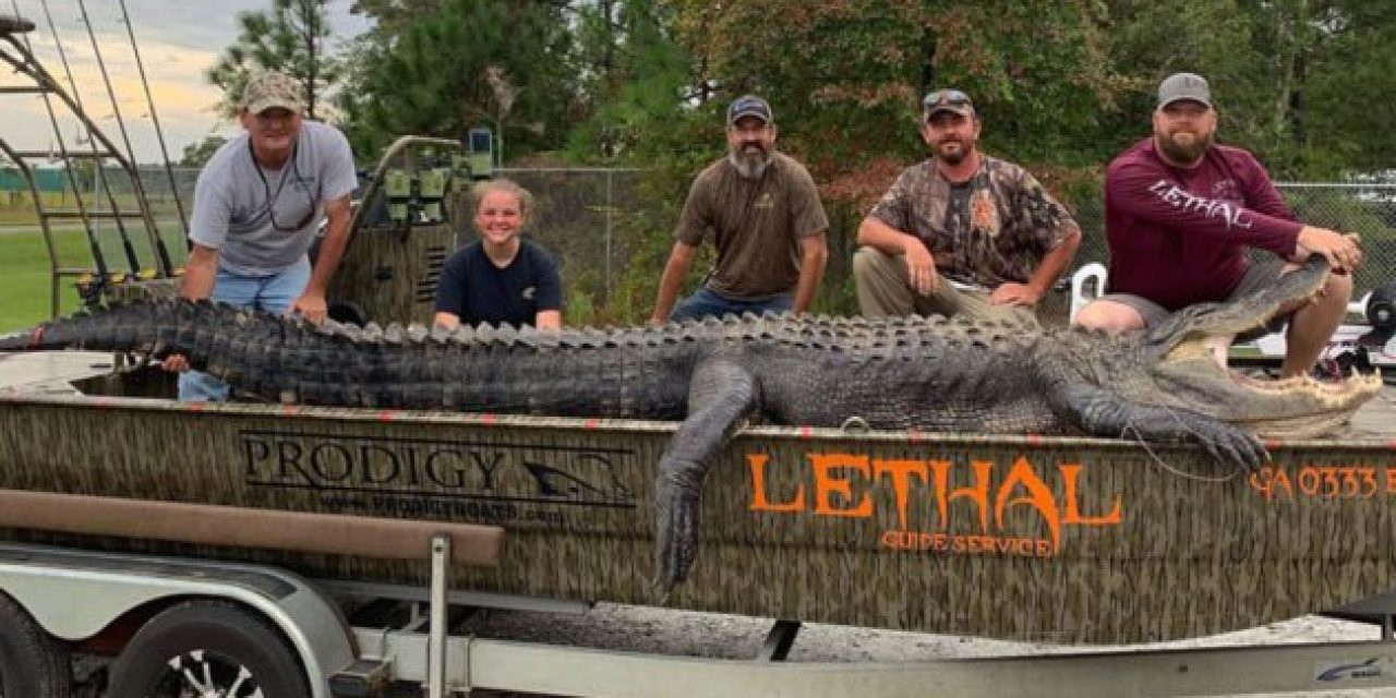 Georgia Father and Daughter Land 14-Foot Alligator, Break State Record
