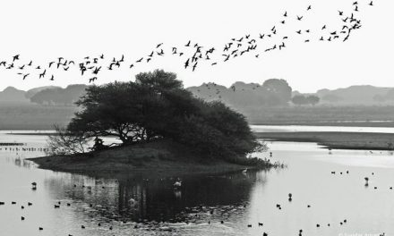Photo Of The Day By Sundar Amartur