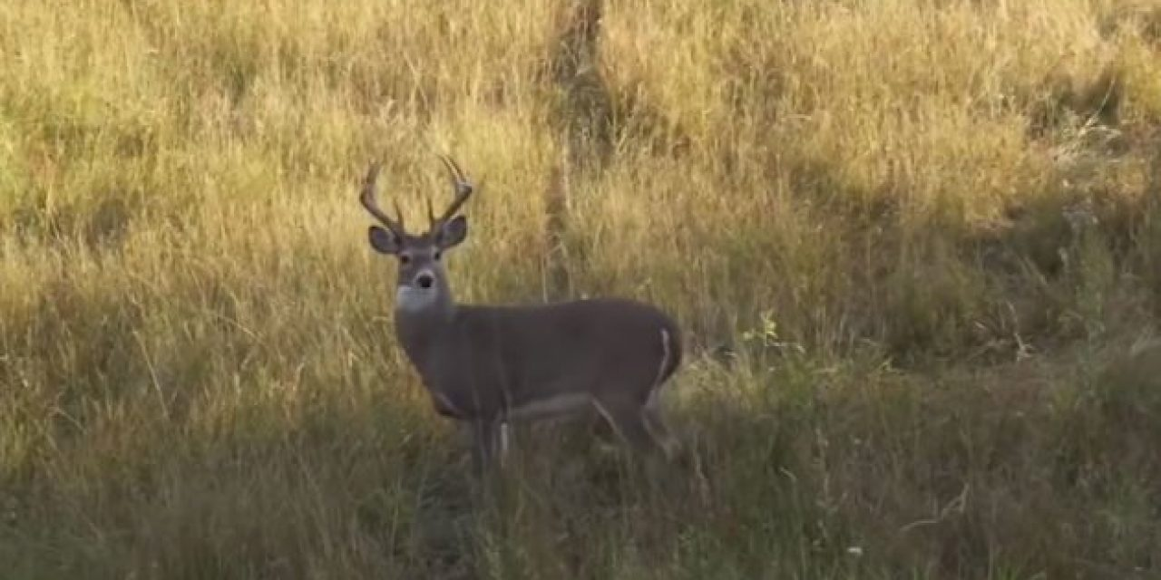 This Video Will Make Every Bowhunter Uncontrollably Anxious for Archery Season