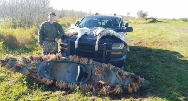 Brothers in Trouble After Illegal Swan Hunt in Michigan