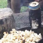Campfire Popcorn Hack: Can You Use an Empty Beer Can?