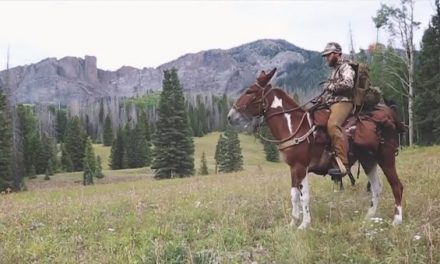Father and Son Take Mules into Colorado Backcountry for Memorable Elk Hunt