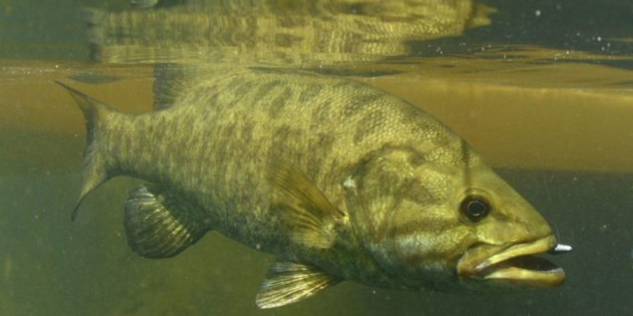 Finesse Fishing: What is It, and Are You Actually Doing It Right?