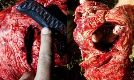Look at What This Dead Ringer Broadhead Did to a Maryland Buck