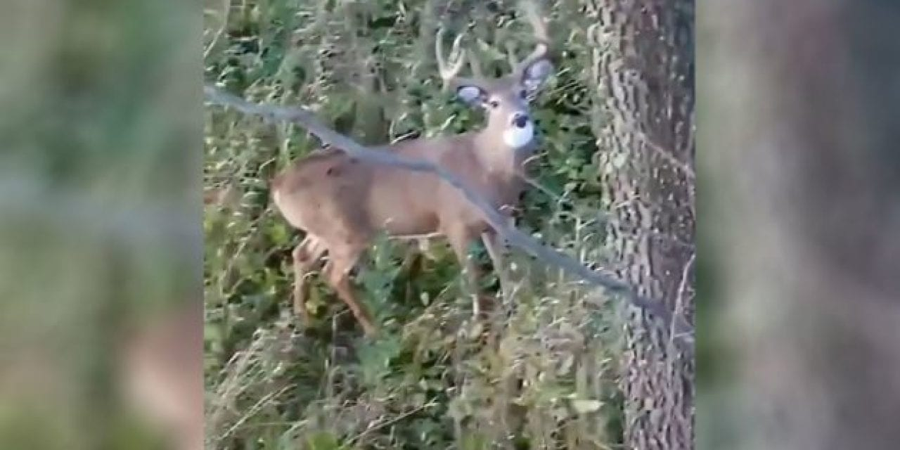One Measly Tree Branch Turns an Easy Shot Into a Blooper