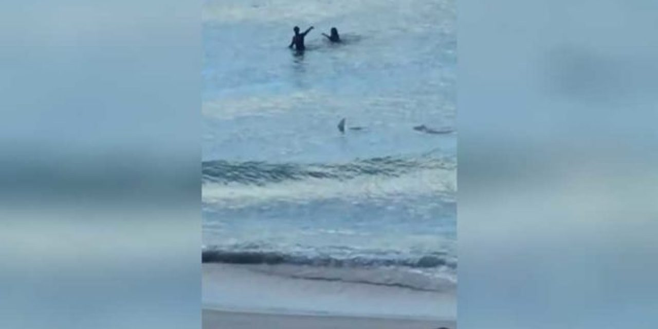 Shark Gets Extremely Close to Two Miami Beachgoers
